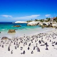 Cape Town'da yapılacak 20 şey