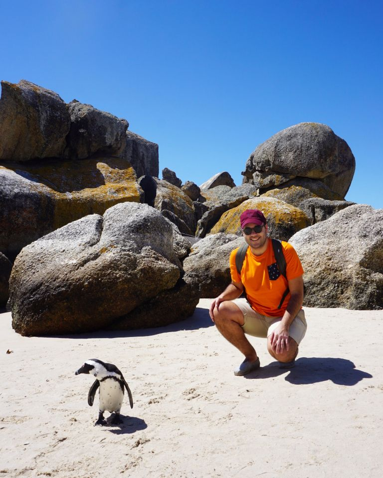 African Penguins at Boulder Beach 3 (Cape Town, Güney Afrika, South Africa)