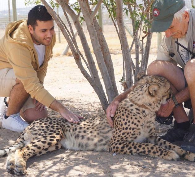 Cheetah Outreach (Cape Town, Güney Afrika, South Africa)