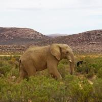 Cape Town'dan günübirlik: Safari!