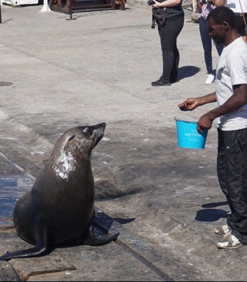 Hout Bay Seals (Cape Town, Güney Afrika, South Africa)