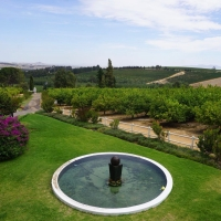 Stellenbosch Şarap Bölgesi (Cape Town)