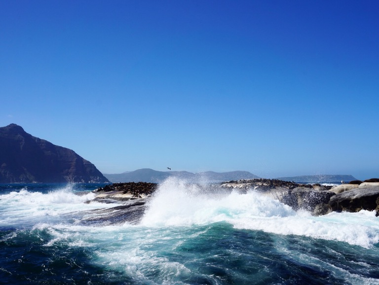 Seals on Duiker Island, Hout Bay (Cape Town, Güney Afrika, South Africa) 2