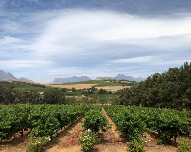 Stellenbosch Vineyards (Cape Town, Güney Afrika, South Africa)