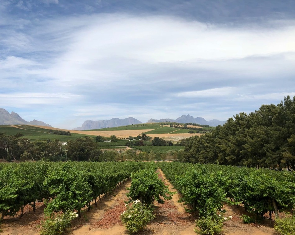 Stellenbosch Vineyards (Cape Town, Güney Afrika, South Africa)