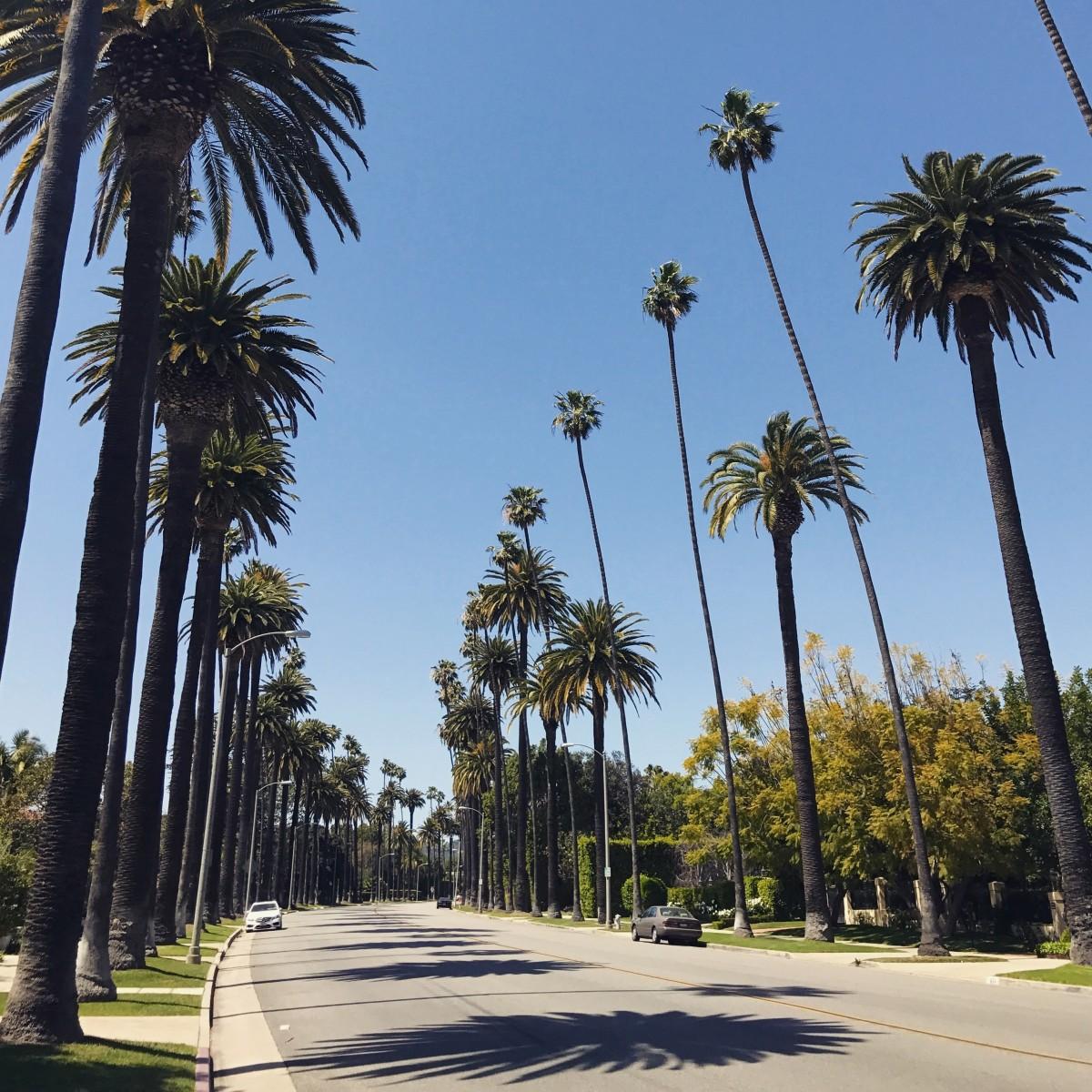 Los Angeles Rehberi