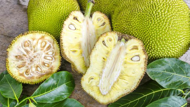 jack fruit, jak meyvesi