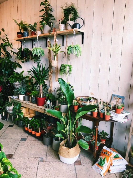 Fancy Plants, Bristol, İngiltere UK